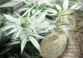 Cannabis Cryptocurrencies